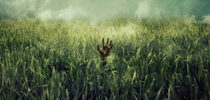 Crítica de En la hierba alta: Netflix se tropieza en la hierba de Stephen King y Joe Hill